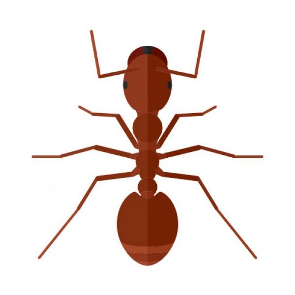 Inseticida para formigas